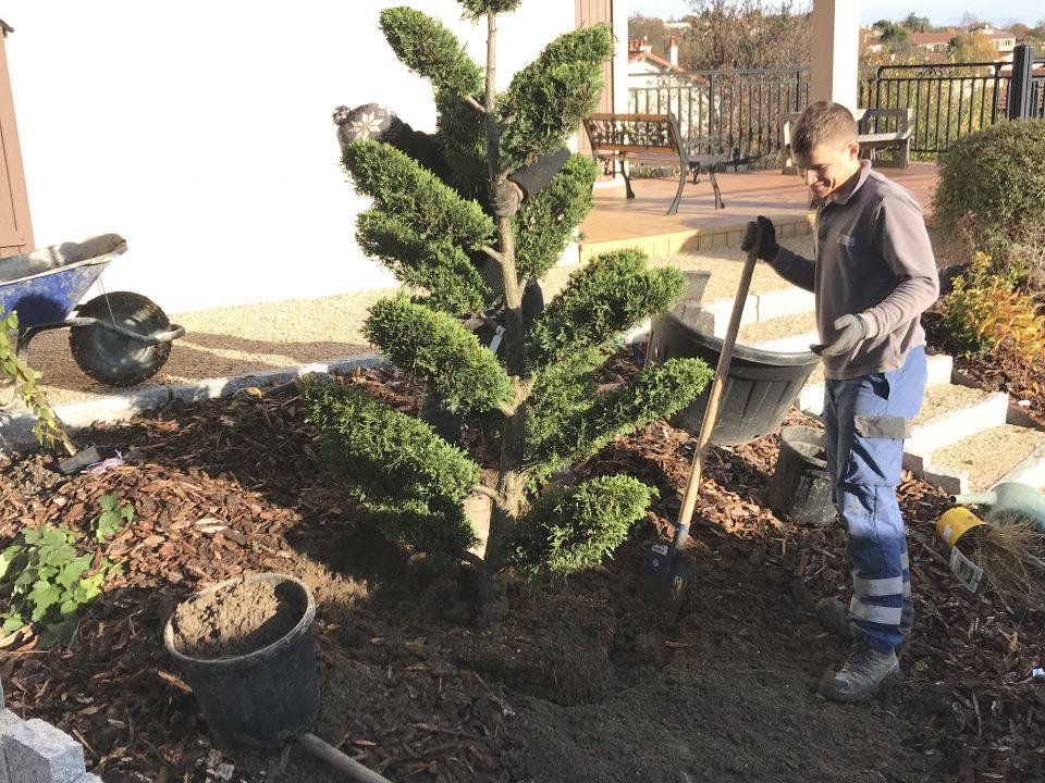 Un arbre de plus dans le jardin !
